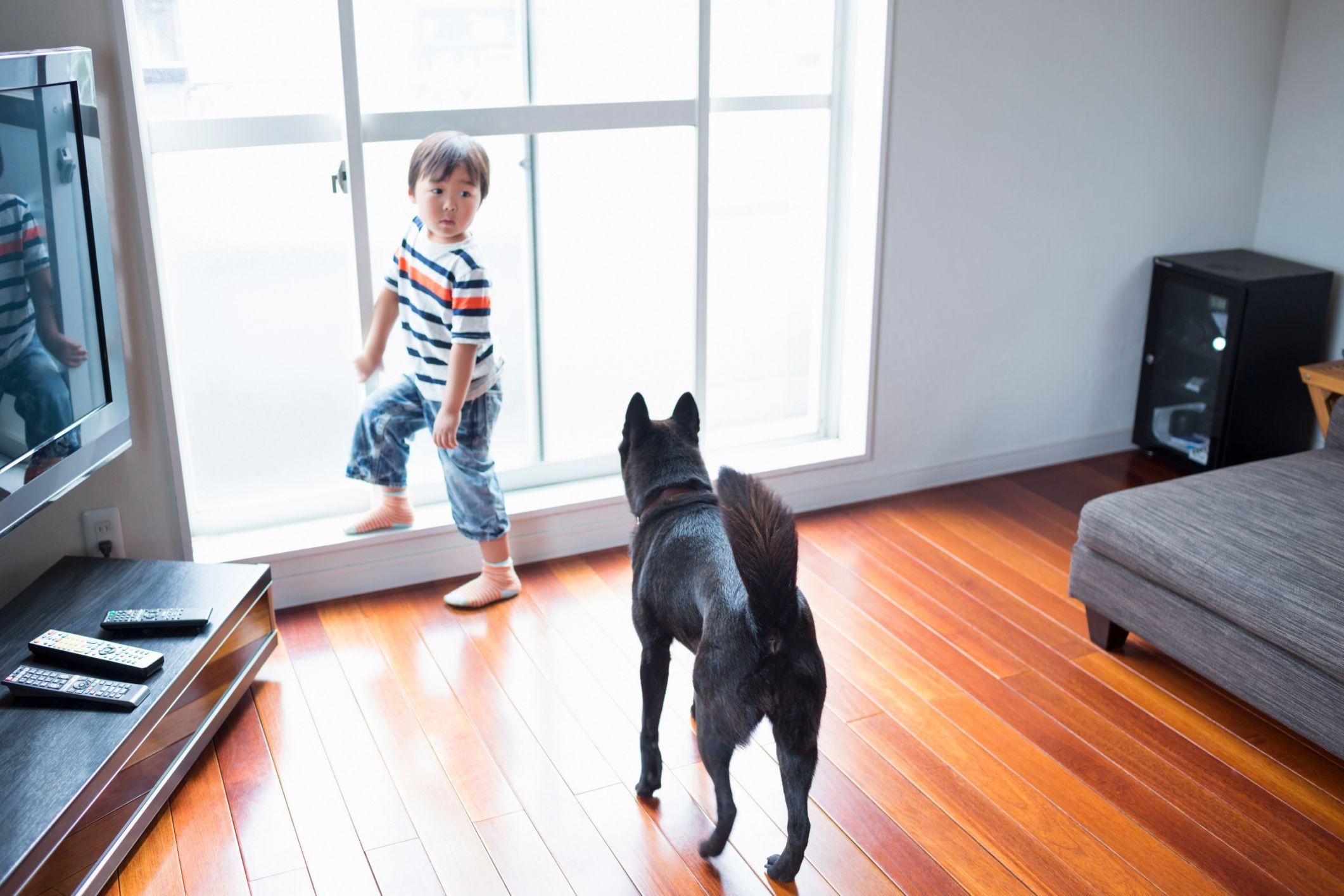 bamboo vs hardwood flooring durability of the most durable flooring you can install regarding dog on wooden floor 465892145 56a4a1705f9b58b7d0d7e64e