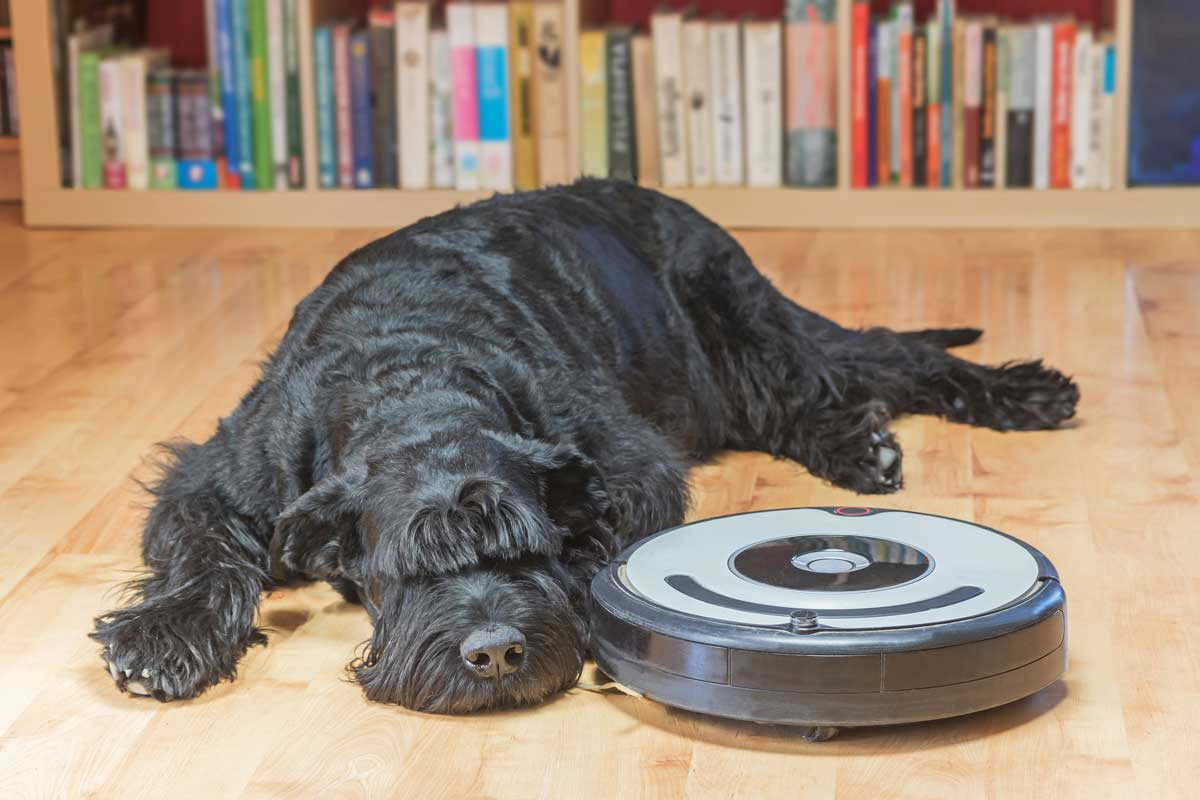 29 Great Best Vacuum for Pet Hair On Hardwood Floors and Carpet 2021 free download best vacuum for pet hair on hardwood floors and carpet of stupendous vinegar ways to remove pet hair wikihow together with intended for soothing pet hair vacuum