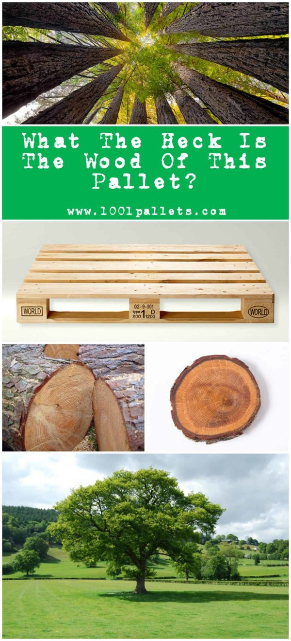 can you have two different types of hardwood floors of wood types what the heck pallets are made out of • 1001 pallets intended for learn how to identify the different types of pallet wood