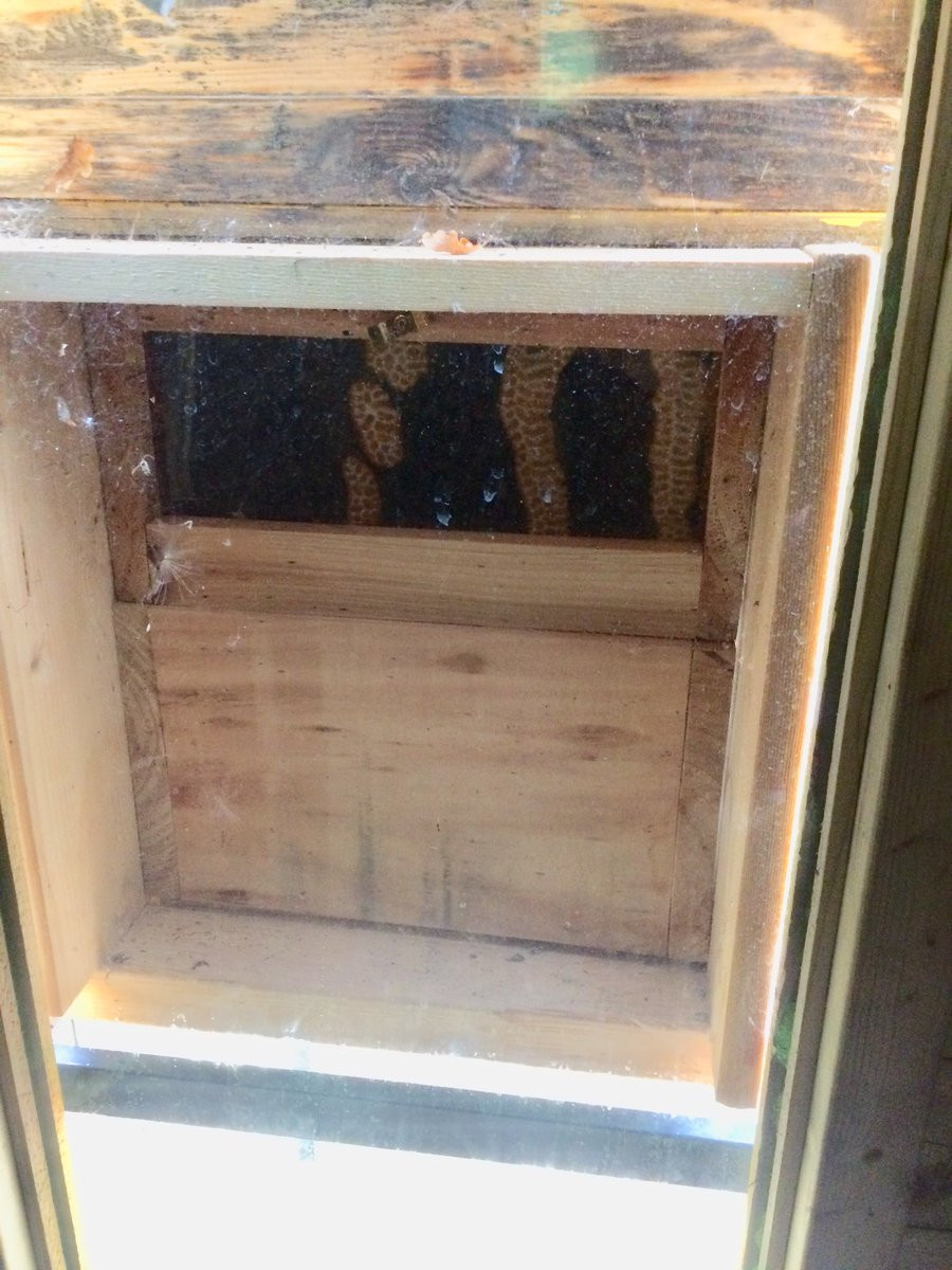 29 Elegant Canada Hardwood Flooring Pickering 2021 free download canada hardwood flooring pickering of zoe pickering pickeringzoe twitter with 1 reply 1 retweet 10 likes