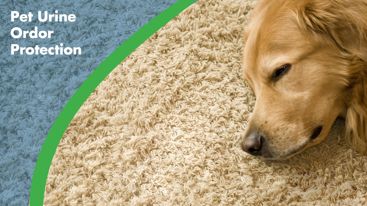 hardwood floor cleaner for pets of pet odor removal chem dry of madison intended for pet odor removal by chem dry of madison
