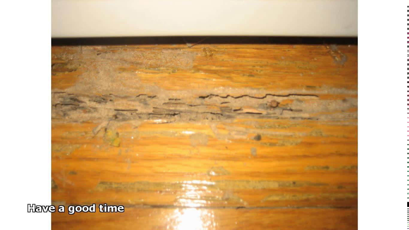 hardwood floor epoxy filler of cleaning old hardwood floors youtube regarding cleaning old hardwood floors