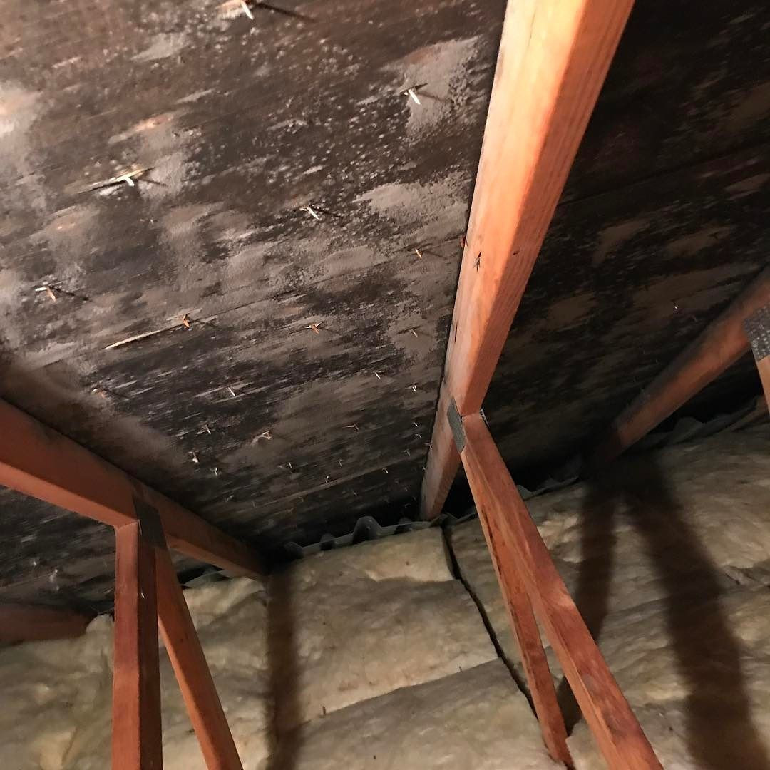 hardwood floor installation syracuse ny of black attic mold syracuseny onondaga moldremoval moldtesting intended for black attic mold syracuseny onondaga moldremoval moldtesting moldabatement crawlspace