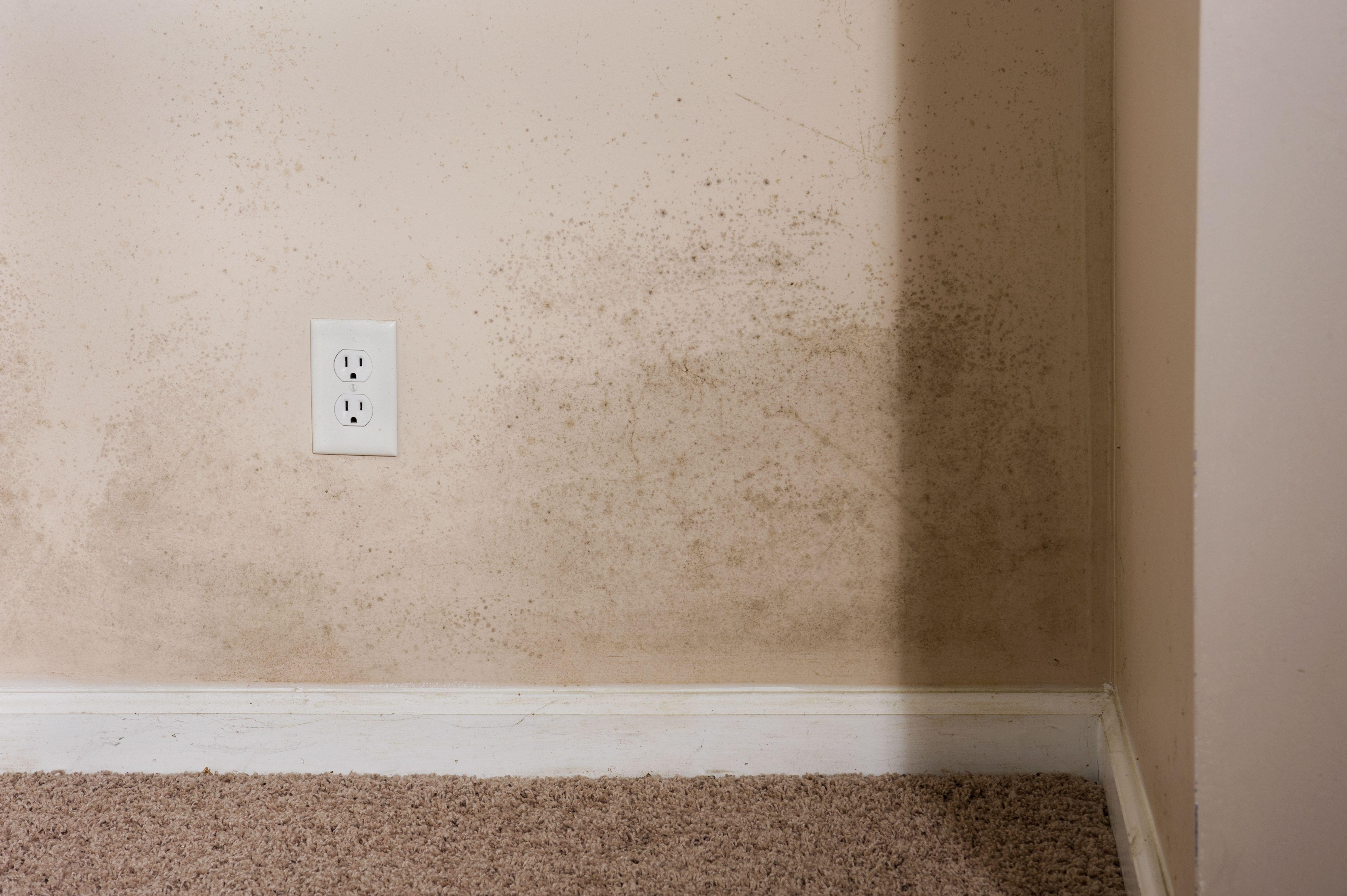 hardwood floor over concrete basement of white mold on basement floor intended for home interior mold e5f9b5815d9ddf60d white mold on basement