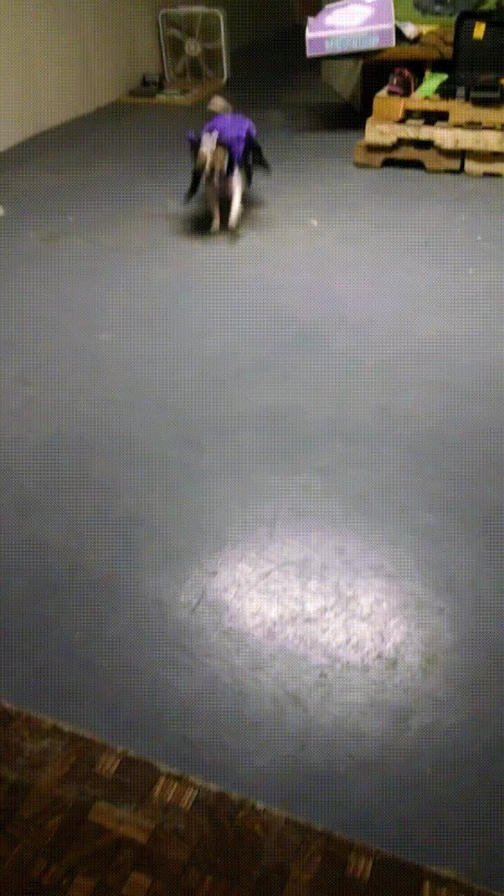hardwood floor refinishing bethlehem pa of http imgur com gallery zamdnma daily http imgur com zamdnma with regard to cxqjp9p