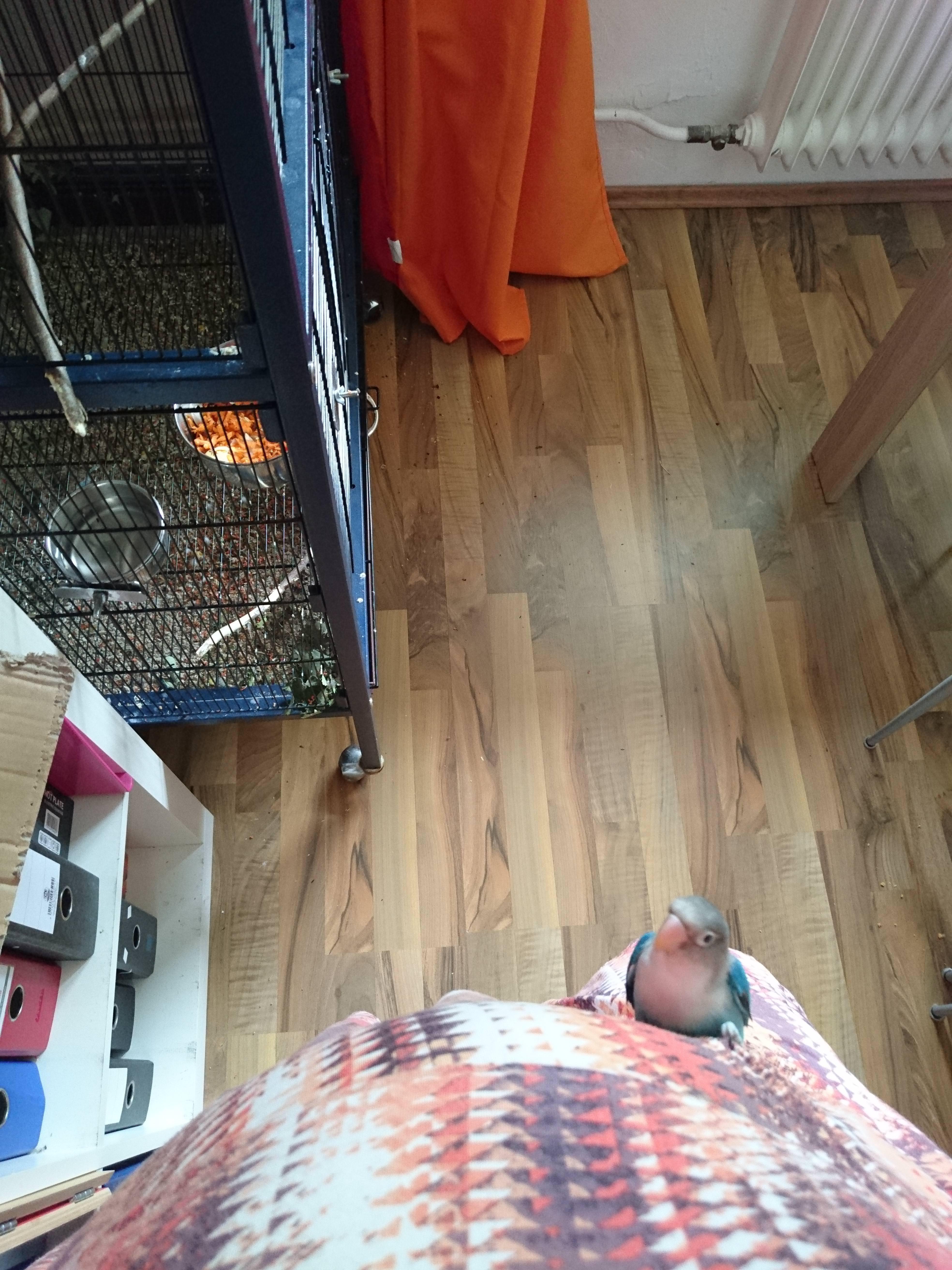 hardwood floor refinishing little rock ar of http imgur com gallery px1qz daily http imgur com 2al0zgq in g7rectp