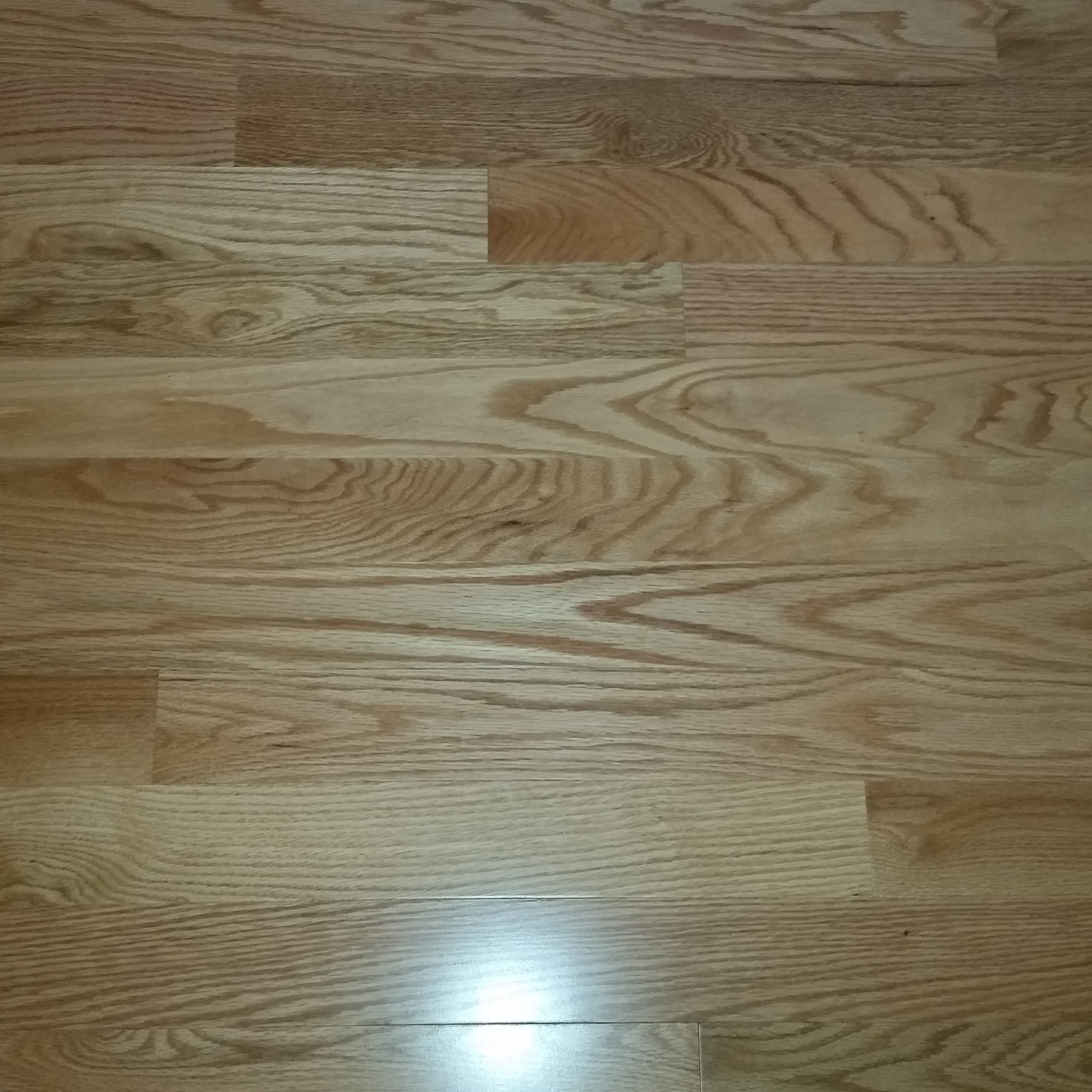 hardwood floor refinishing specialists of hardwood floor refinishing richmond va floor with hardwood floor refinishing richmond va can pets and hardwood floors coexist
