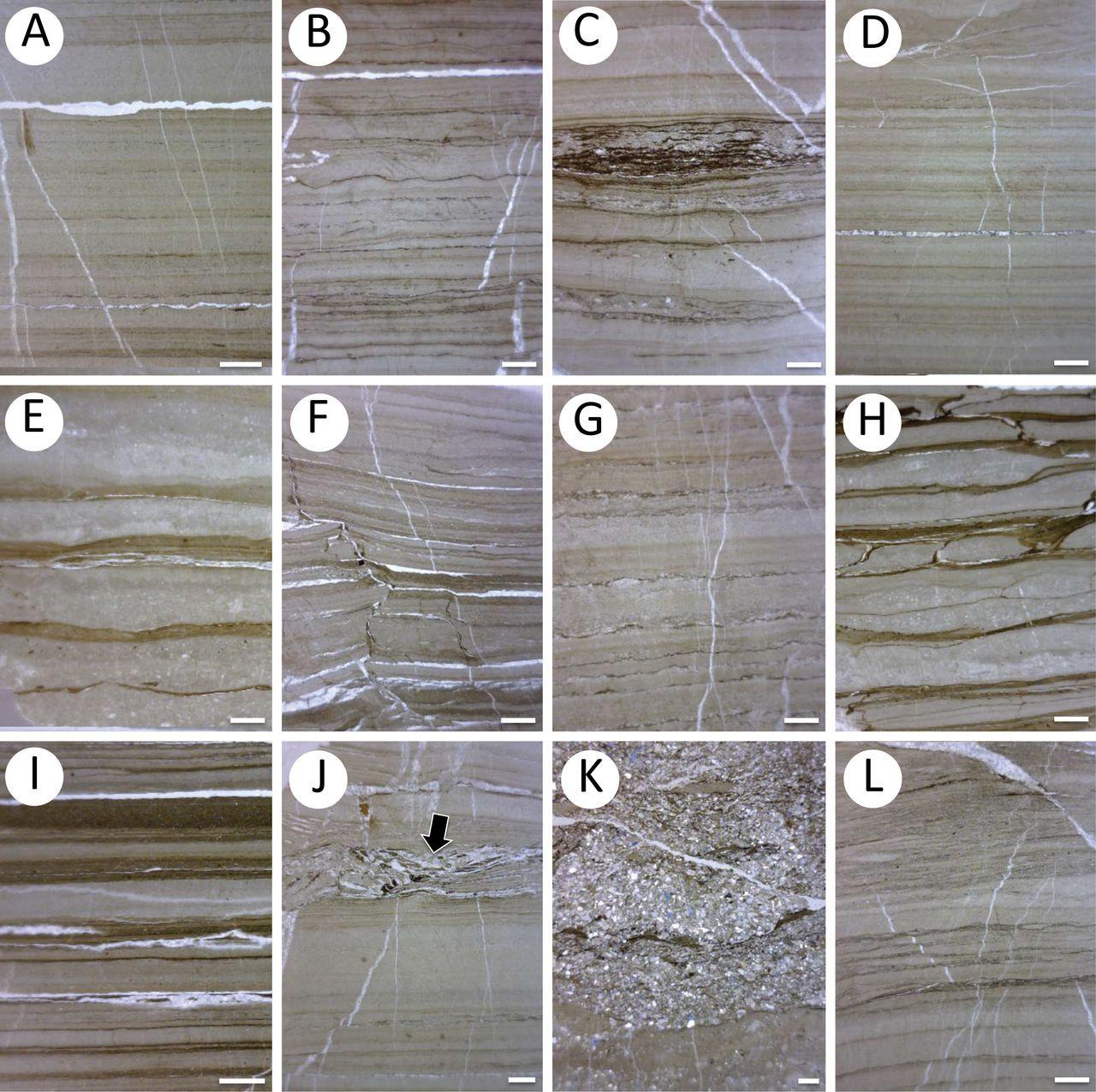 higgins hardwood flooring nh of lacustrine deposits in the karheen formation fortify links between throughout view largedownload slide