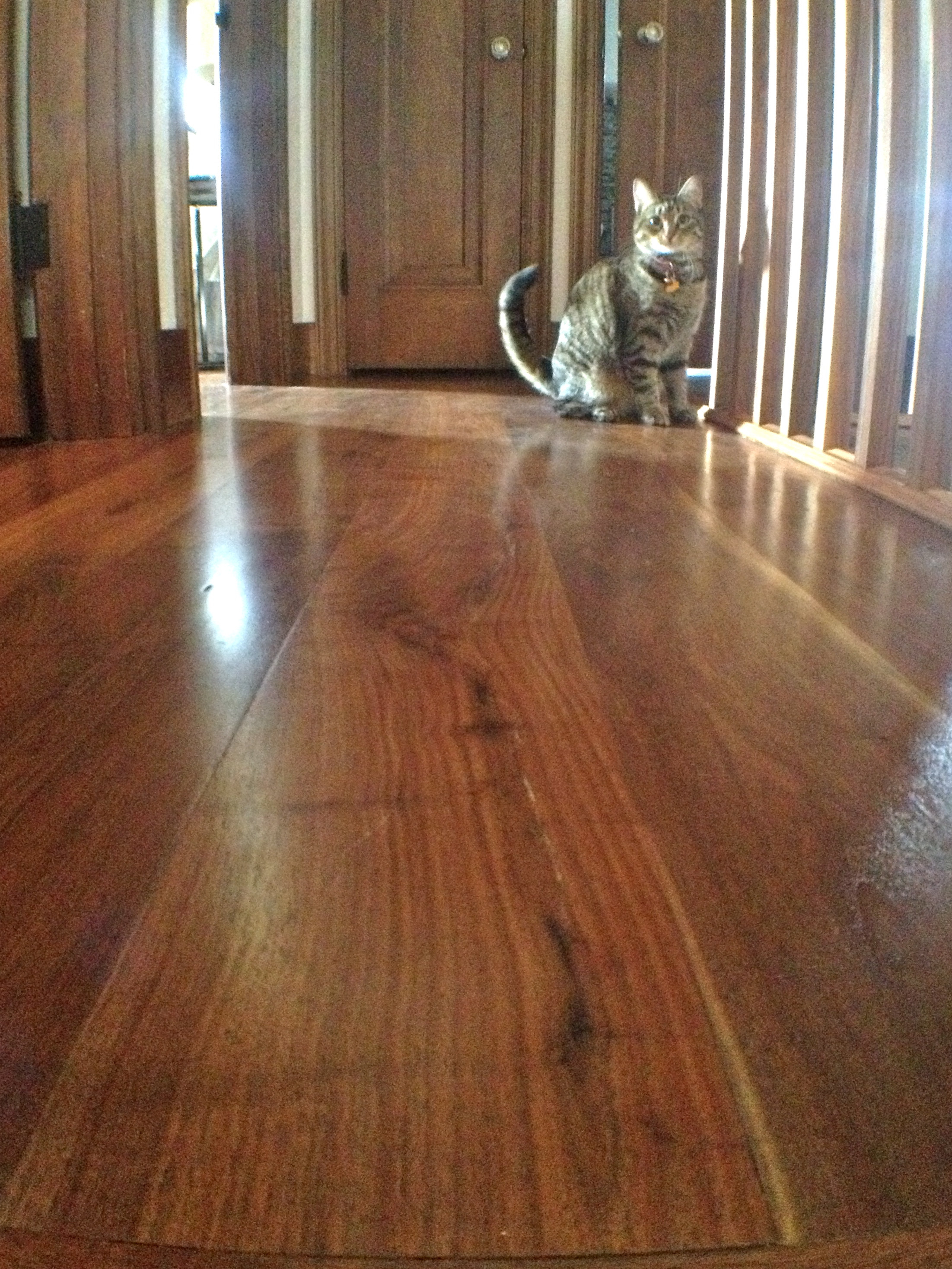 22 Stunning How To Finish An Unfinished Hardwood Floor