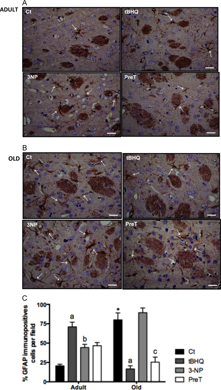 lm engineered hardwood flooring reviews of anti gfap antibody a85419 antibodies com regarding figure 1 redox biol 2017 aug12610 624 doi