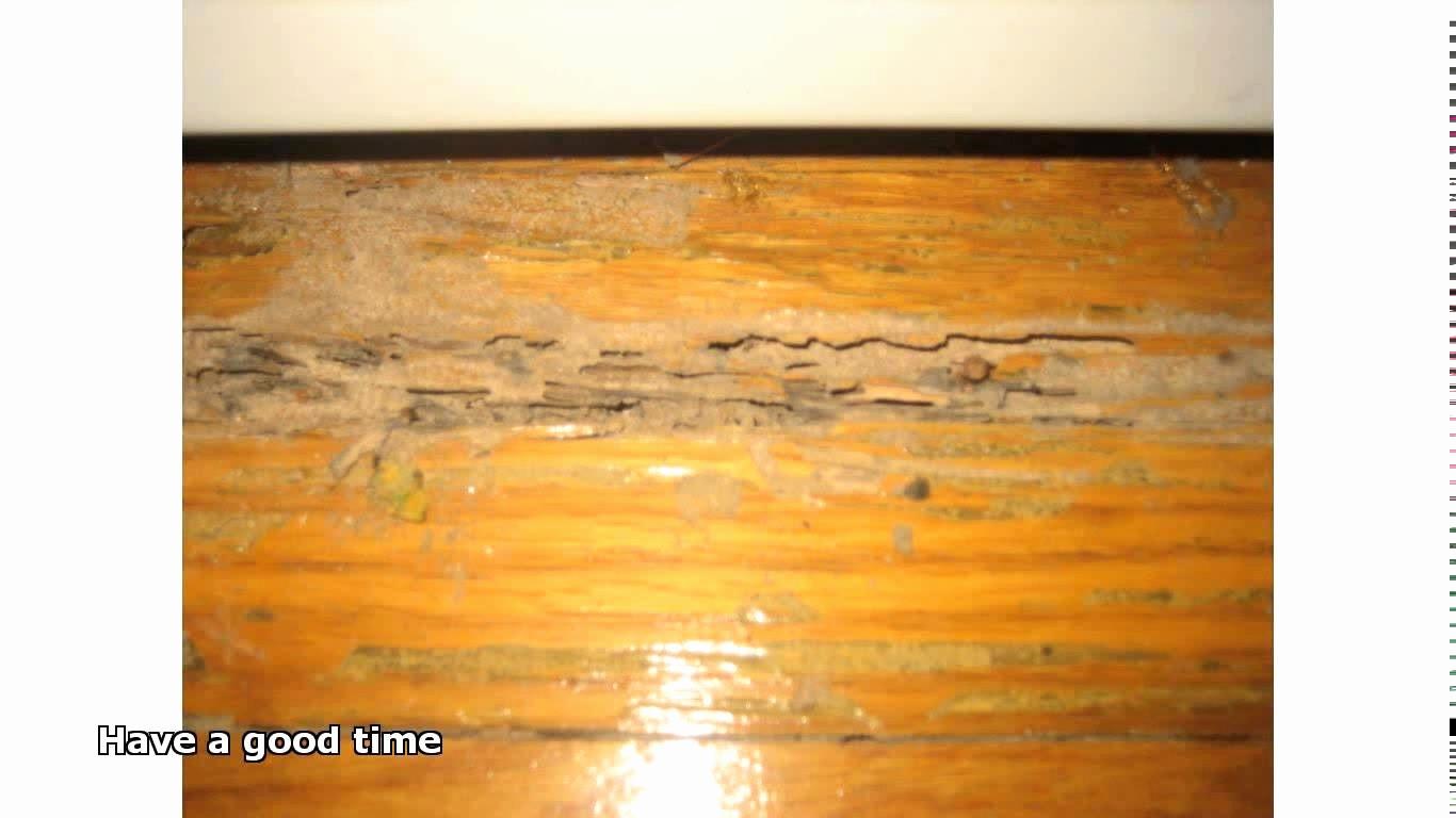 mohawk hardwood flooring care of laminate hardwood floor cleaner elegant mohawk home fcp01 asstd kit regarding laminate hardwood floor cleaner best of diy bamboo floor cleaner cleaning pinterest
