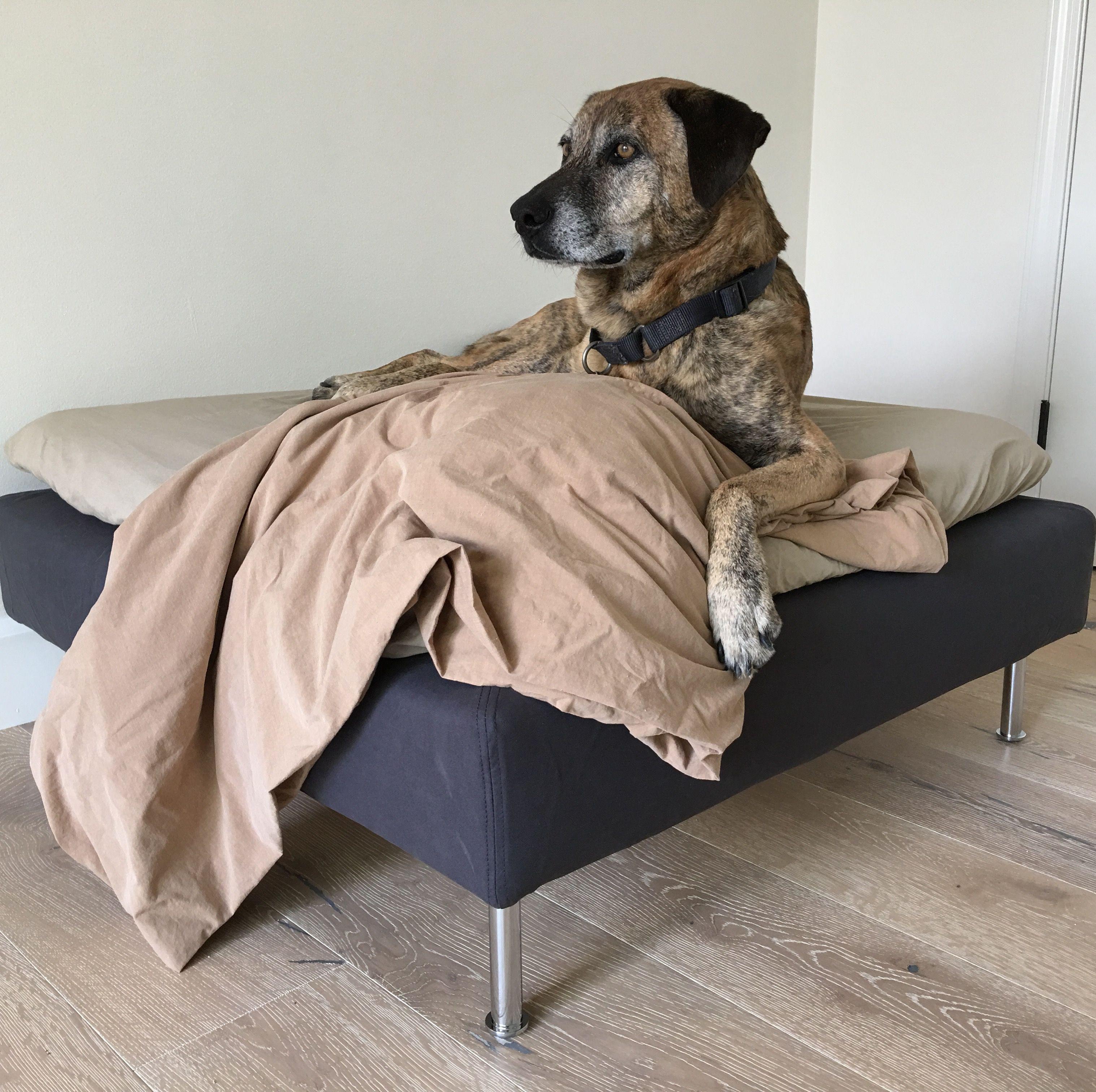 pets and hardwood floors of ikea says ottoman ozzy says dog bed ikea soderhamn ottoman in grey regarding ozzy says dog bed ikea soderhamn ottoman in grey garrison dubois anastasia engineered wood floor