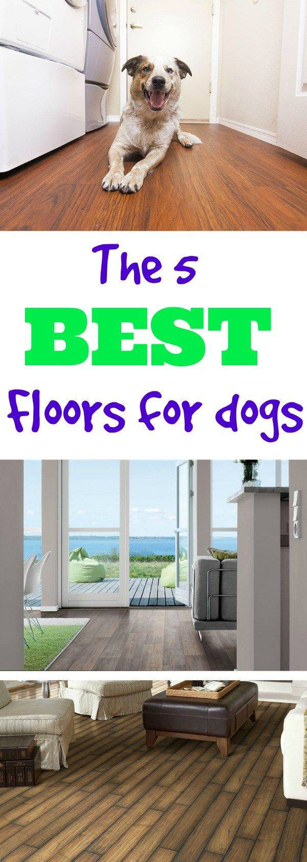 pets and hardwood floors of more what is the most durable flooring for dogs tips best flooring within dog on wooden floor 56a4a1705f9b58b7d0d7e64e of what is the most durable flooring for dogs the most durable flooring you can install