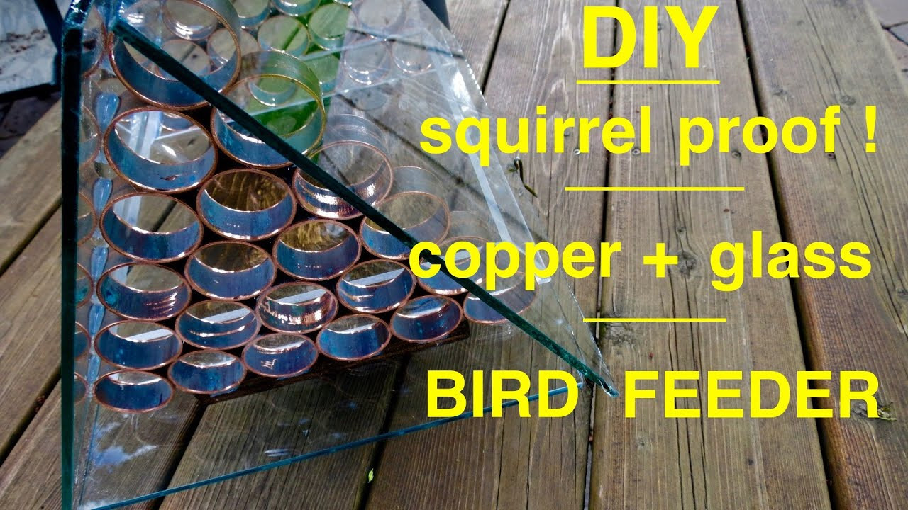 walsh hardwood flooring reviews of how to make a—‹ a squirrel proof bird feeder youtube intended for maxresdefault