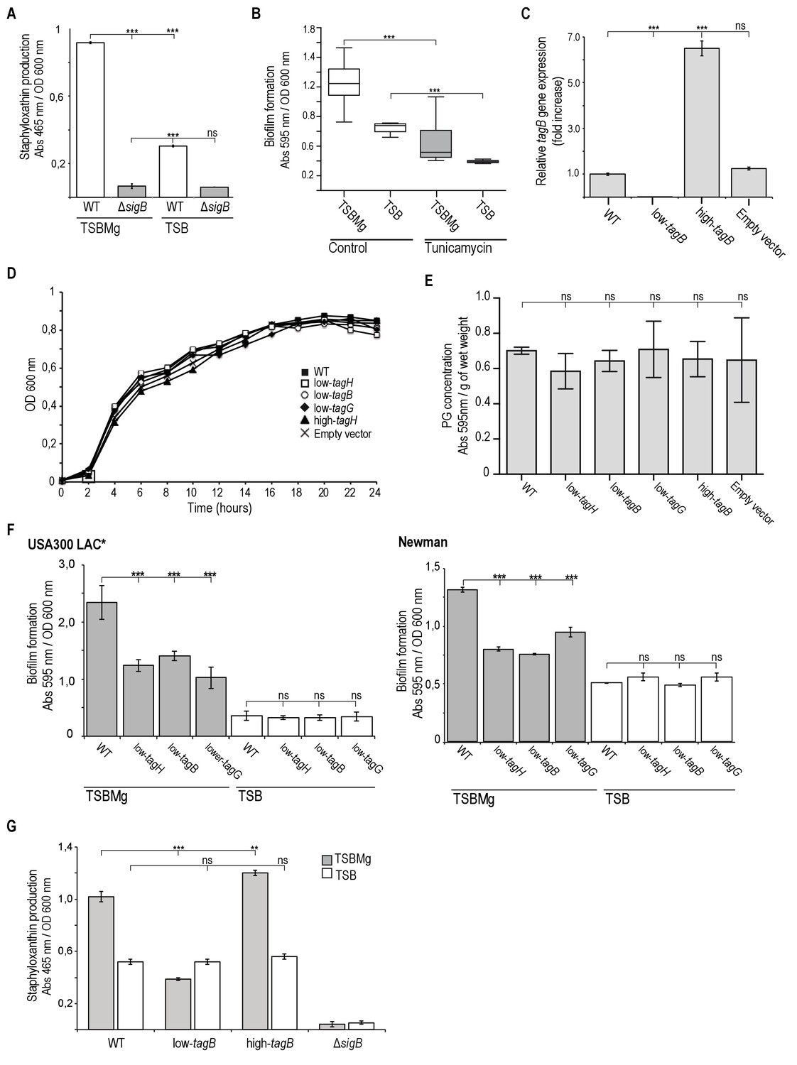 z g hardwood flooring of cell differentiation defines acute and chronic infection cell types intended for extracellular mg2 activates iƒb stress regulon in s auresus